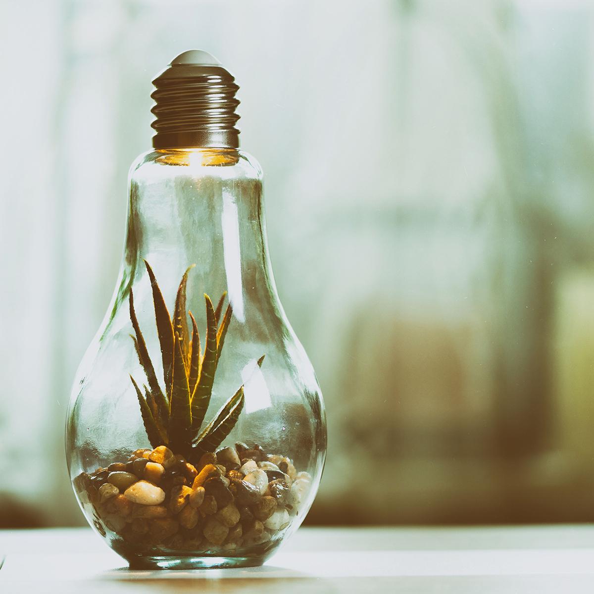 Glühbirne mit kleiner Pflanze